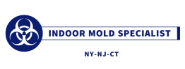Indoor Mold Specialist